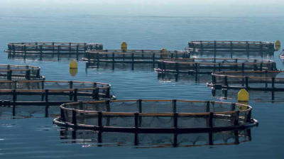 The share of salmon in Russia's aquaculture is set to rise to over a third