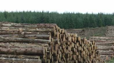 Schweighofer sells its Romanian forests to Swedish GreenGold
