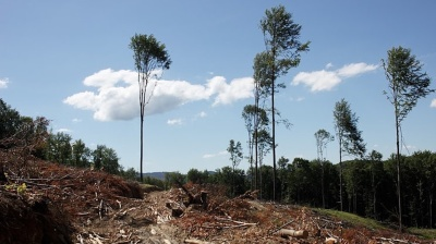 Illegal timber from Ukraine floods European markets