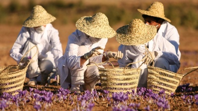 "Israeli agritech unveils ""indoor growing"" plans to challenge Iran's global saffron dominance"