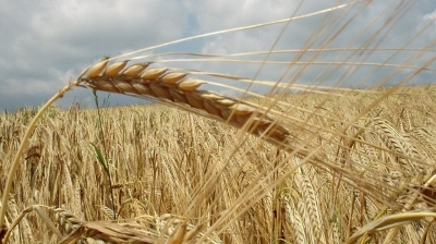 Bad weather threatens 10-15% of Russian grain harvest in 2018
