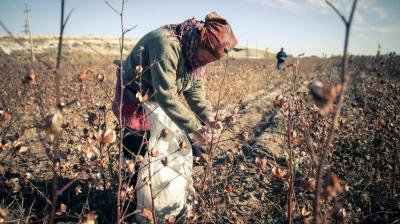 Human rights coalition rejects Uzbekistan's call to end cotton boycott amid pandemic