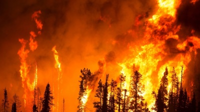 Latvia asks for international help to contain forest fires