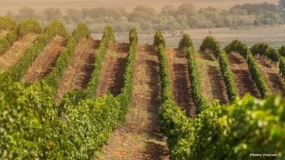 Horizon Capital returns as shareholder in major Romanian-Moldovan winemaker Purcari